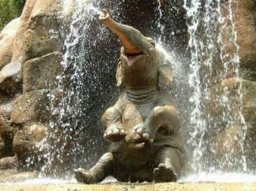 Happy-Animals-Washing