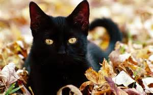 black  cat leaves