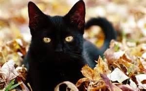 black  cat leaves
