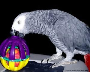 parrotball