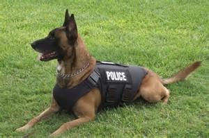 police-dog