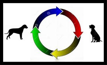 dog cycle 2
